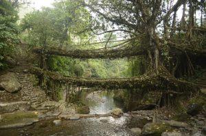 khasi hills forest